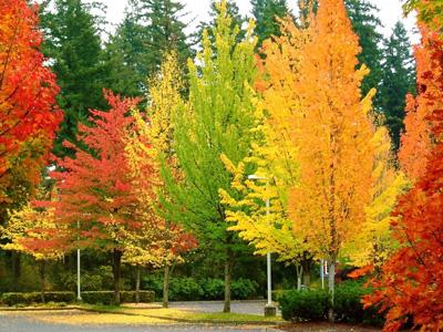 Prodotti - Alberi colorati da giardino ...