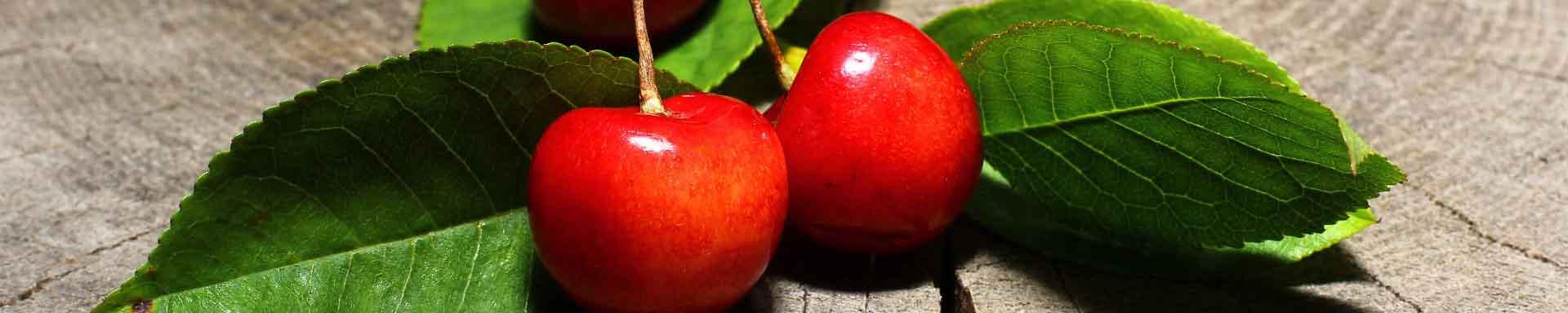 Piante ornamentali da giardino alberi da frutto vendita for Piante da frutto online