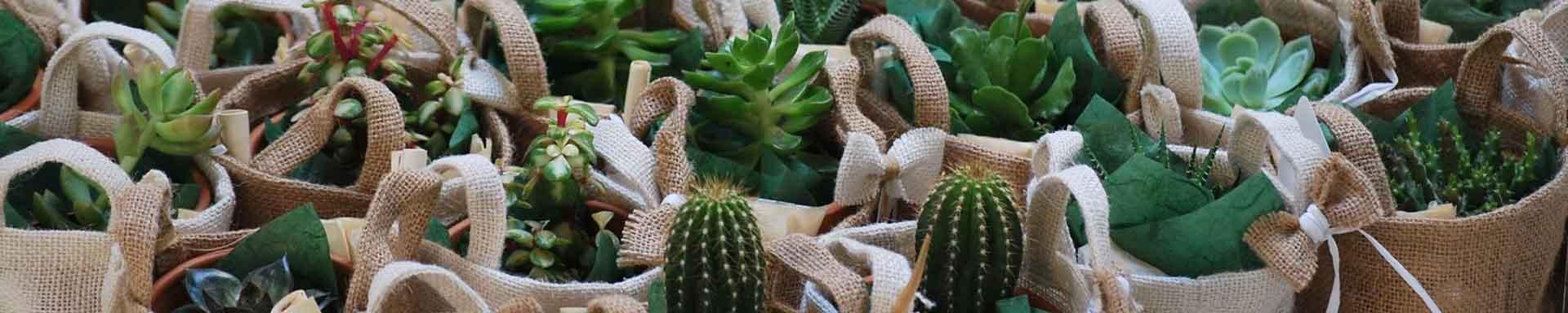 Piante ornamentali da giardino alberi da frutto vendita for Piante grasse ornamentali