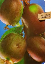 Actinida Arguta (Kiwi)