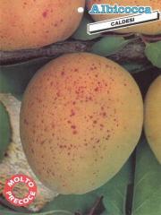 Albicocca Caldesi