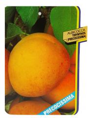 Albicocca Tirynthos (Precocissima)