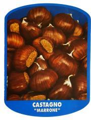 Castagno Marrone