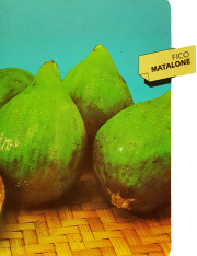 Fico Matalone