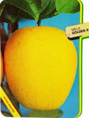 Mela Golden B