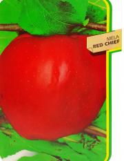 Mela Red Chief