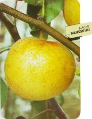 Nashi Nijisseiki