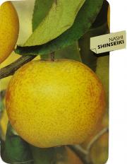 Nashi Shinseiki