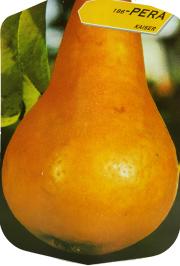 Pera Kaiser