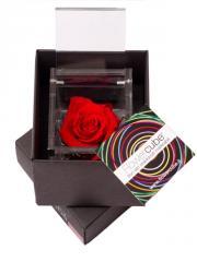 Rose stabilizzate della serie Flower Cube