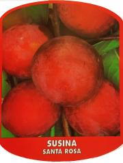 Susina Santa Rosa