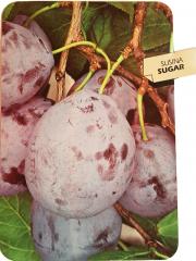 Susina Sugar